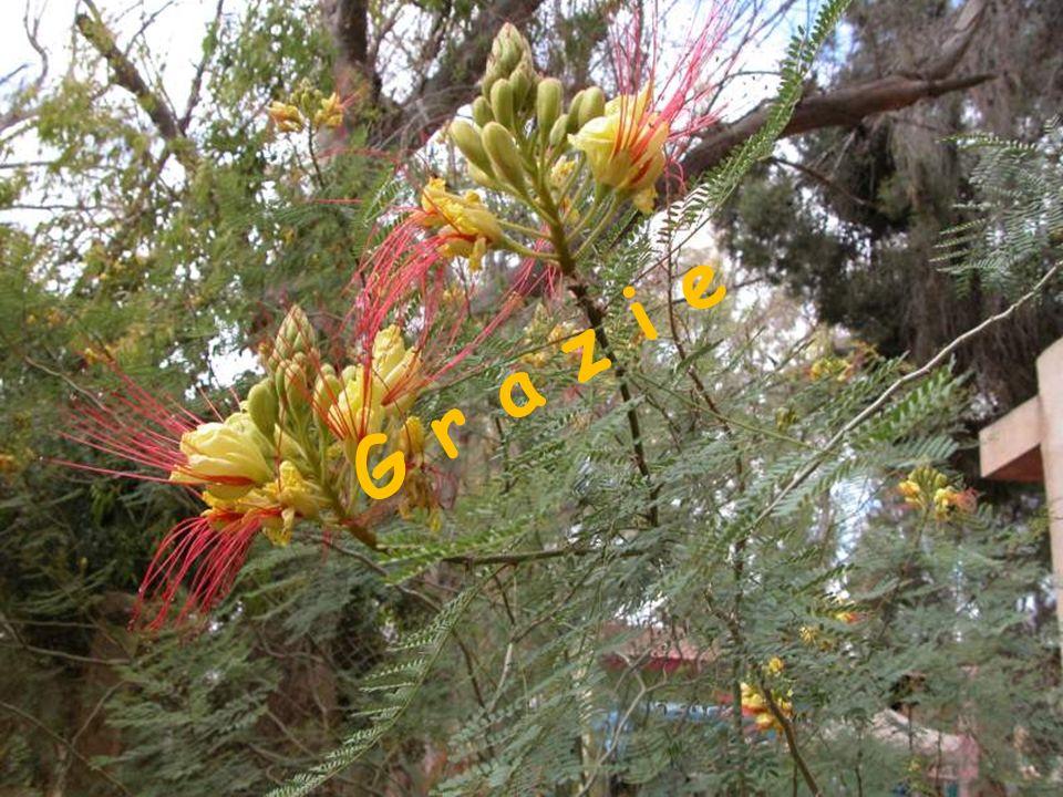 G r a z i e pavia 30 gennaio 2010