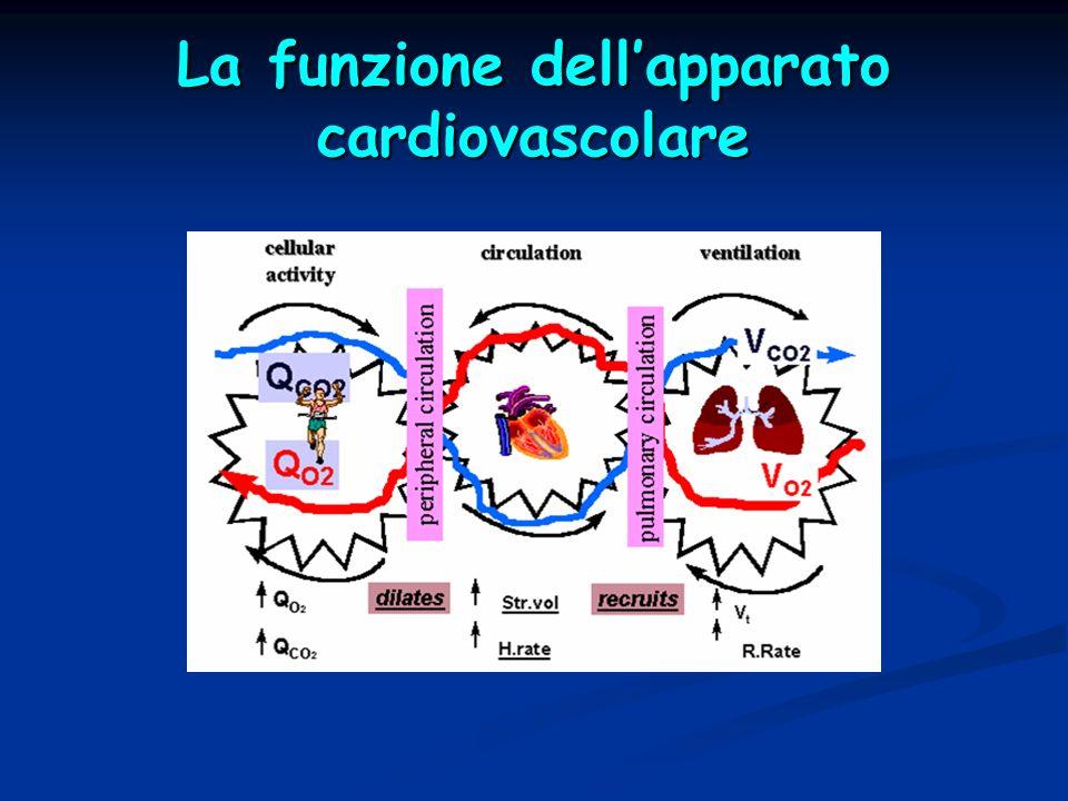 La funzione dell'apparato cardiovascolare