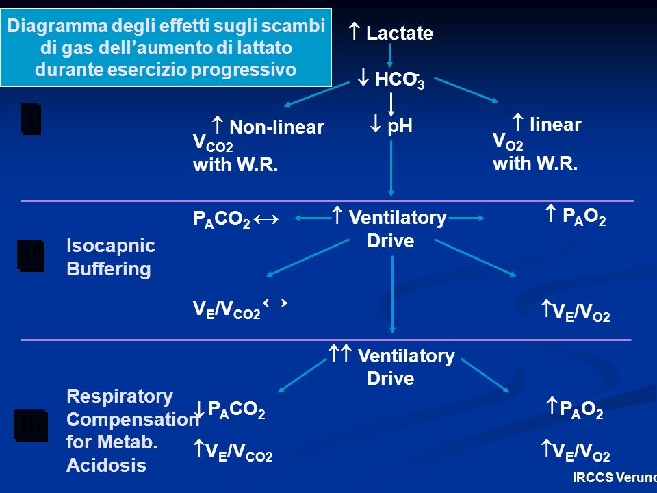 Lactate HCO3 pH Ventilatory Drive Ventilatory I
