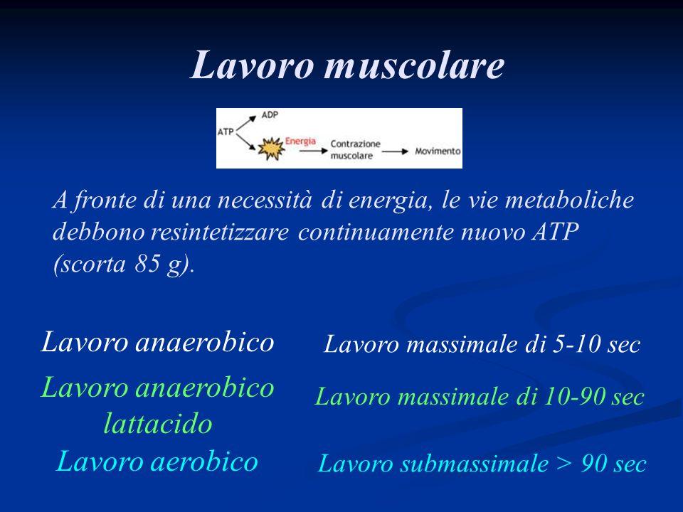 Lavoro muscolare Lavoro anaerobico Lavoro anaerobico lattacido