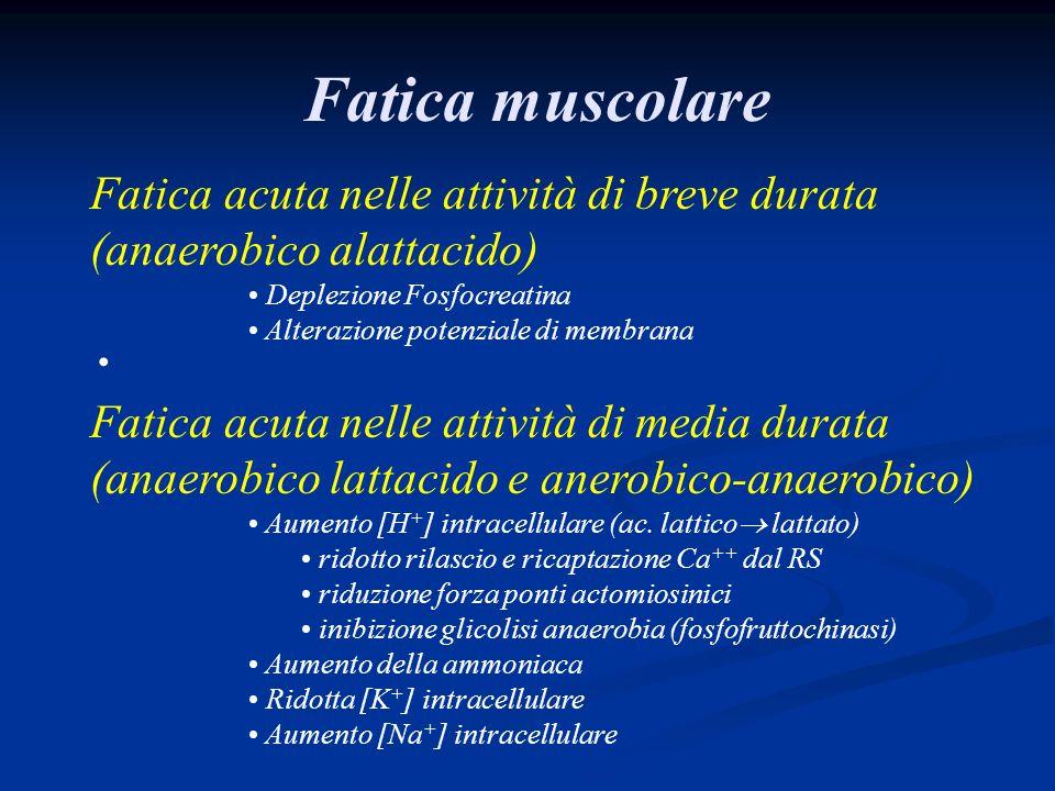 Fatica muscolare Fatica acuta nelle attività di breve durata