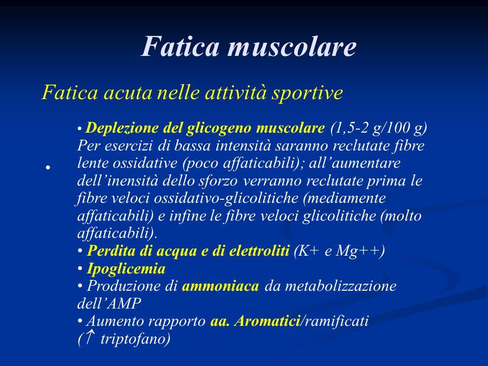 Fatica muscolare Fatica acuta nelle attività sportive