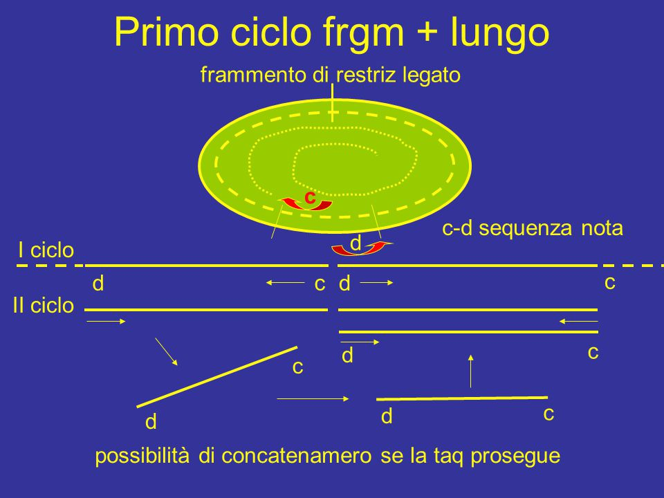 Primo ciclo frgm + lungo