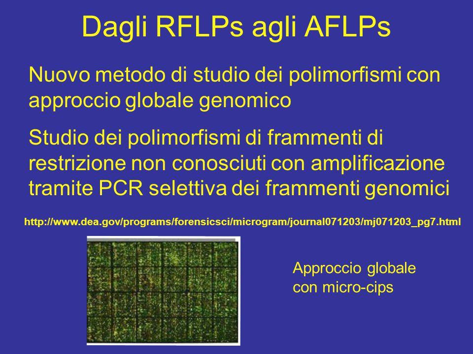 Dagli RFLPs agli AFLPs Nuovo metodo di studio dei polimorfismi con approccio globale genomico.