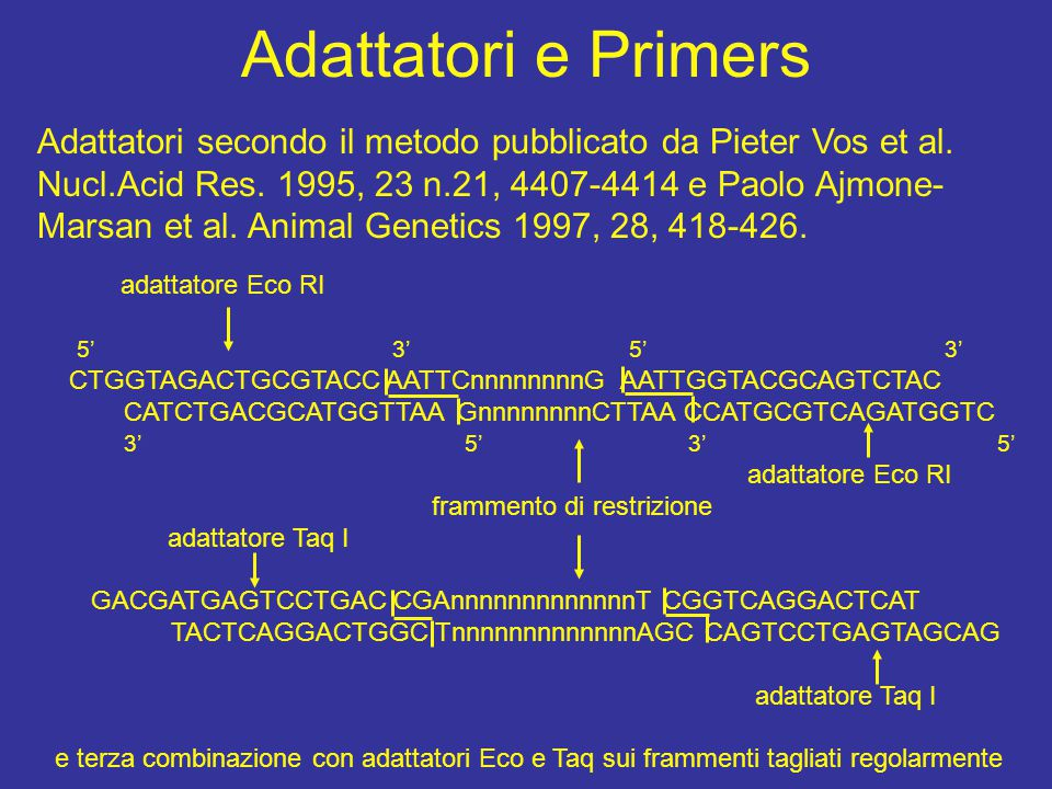 Adattatori e Primers