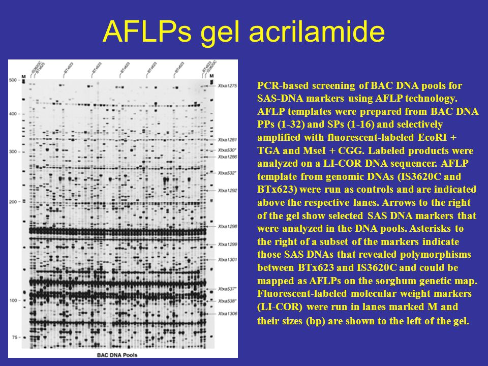AFLPs gel acrilamide