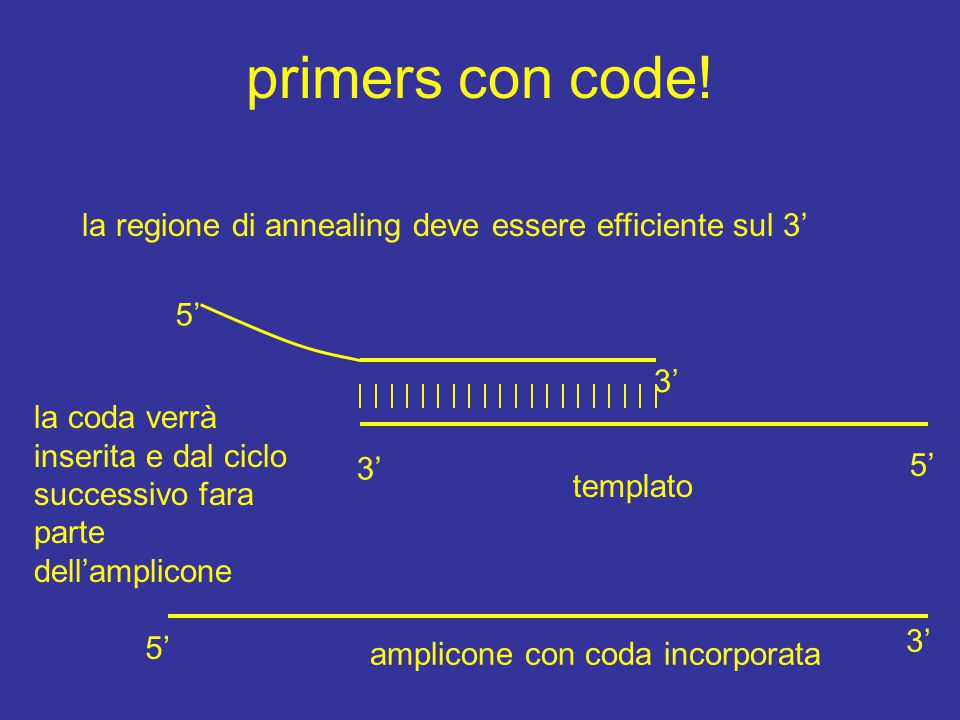 primers con code! la regione di annealing deve essere efficiente sul 3' 5' 3'