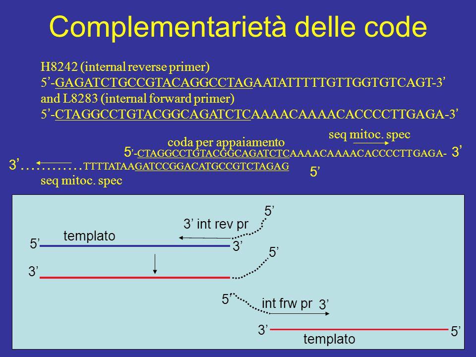 Complementarietà delle code