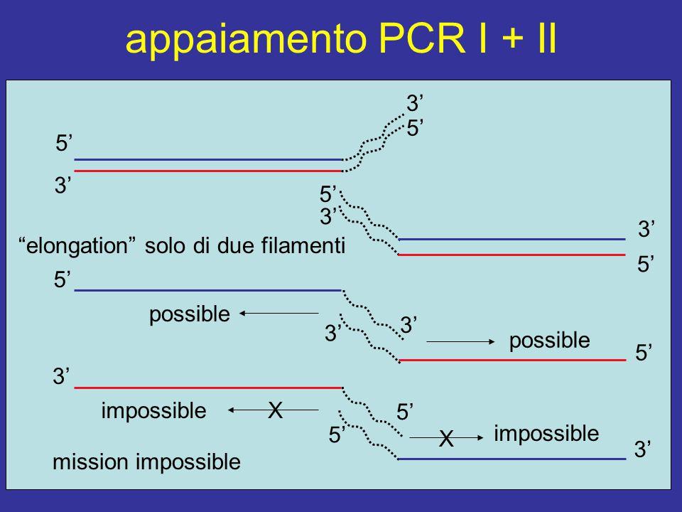 appaiamento PCR I + II 3' 5' elongation solo di due filamenti