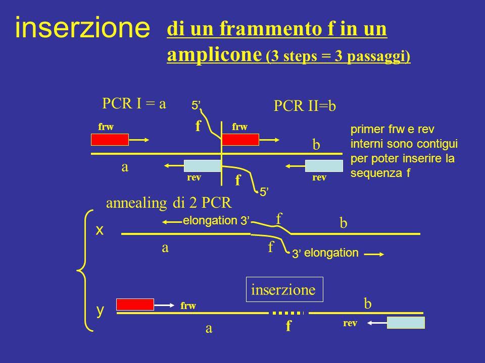 inserzione di un frammento f in un amplicone (3 steps = 3 passaggi)