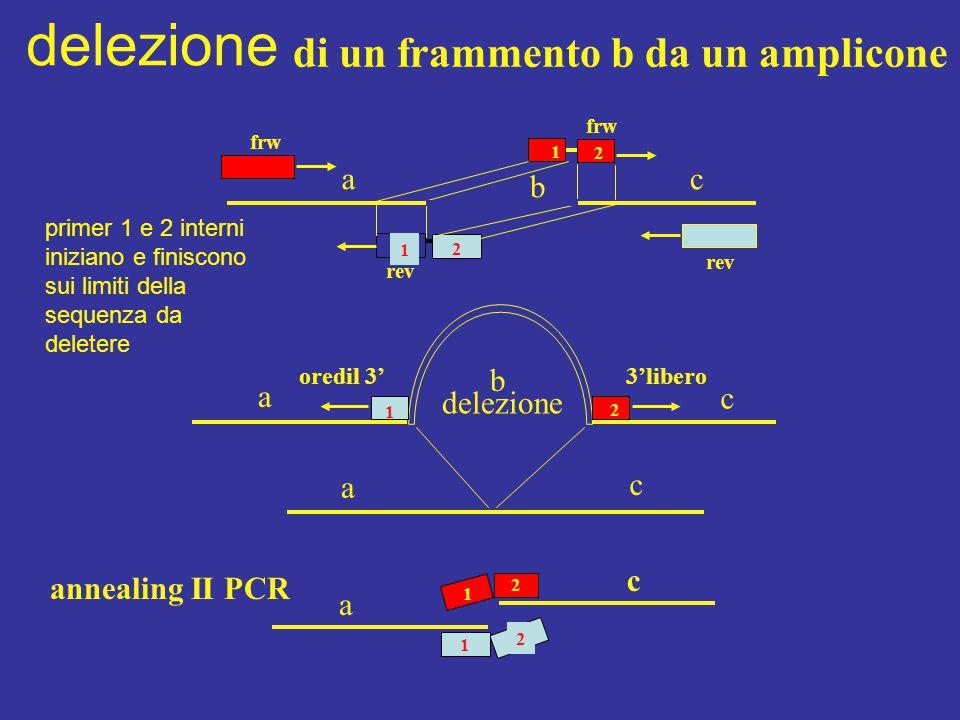 delezione di un frammento b da un amplicone a c b b a delezione c a c