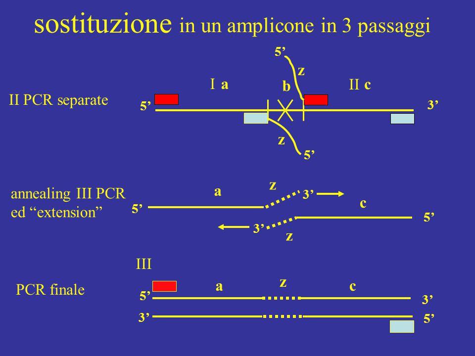 sostituzione in un amplicone in 3 passaggi z I a b II c