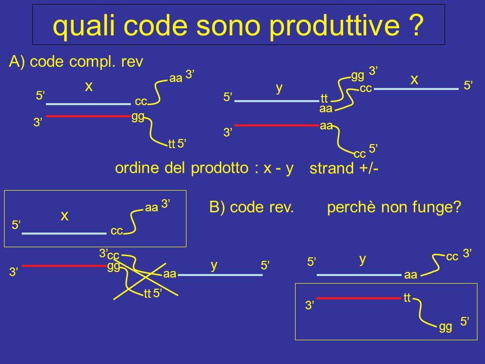 quali code sono produttive