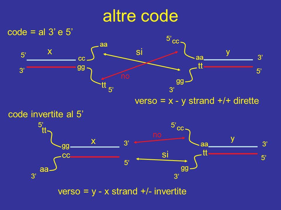altre code code = al 3' e 5' x si verso = x - y strand +/+ dirette
