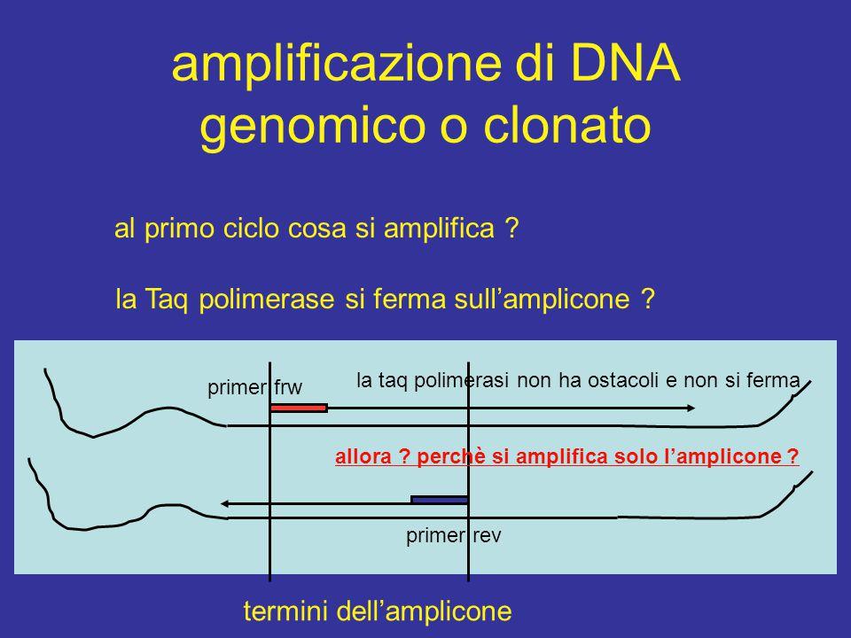 amplificazione di DNA genomico o clonato