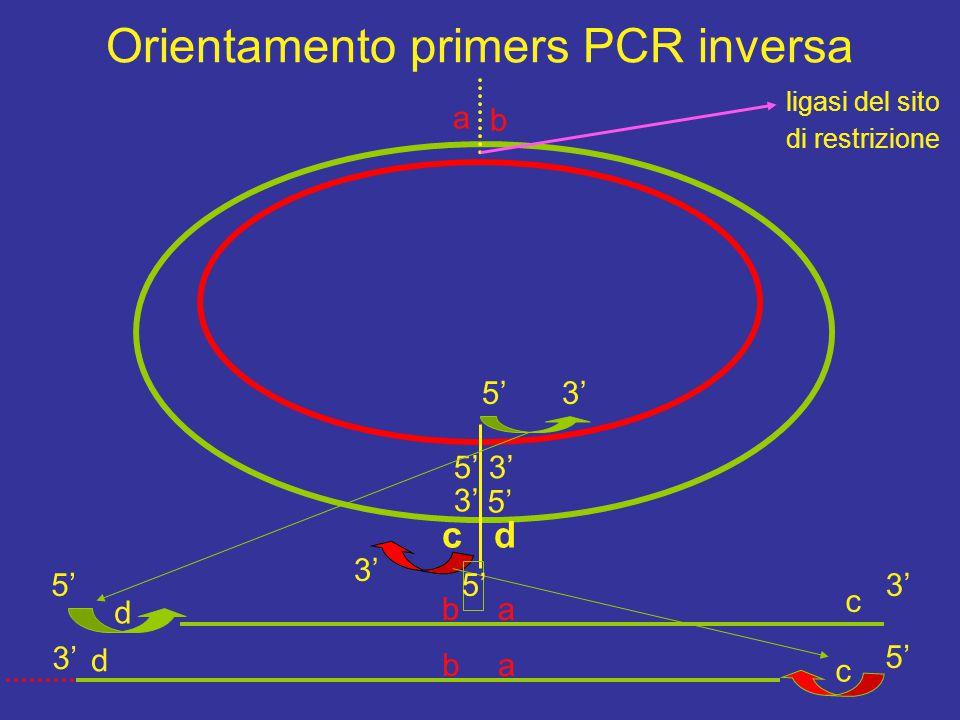 Orientamento primers PCR inversa
