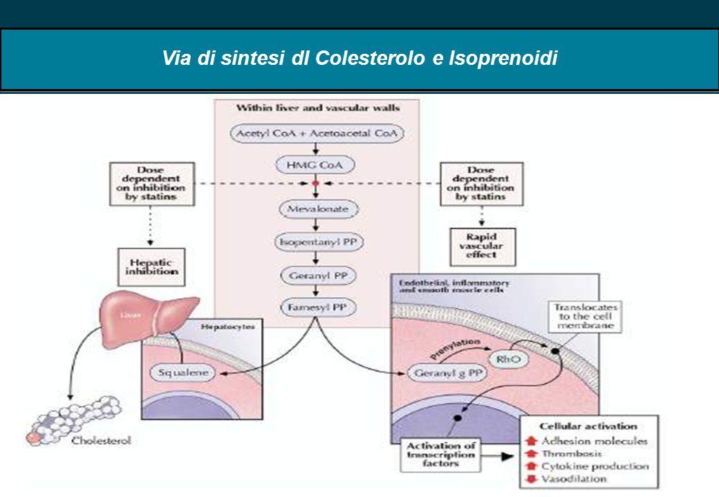 Via di sintesi dl Colesterolo e Isoprenoidi