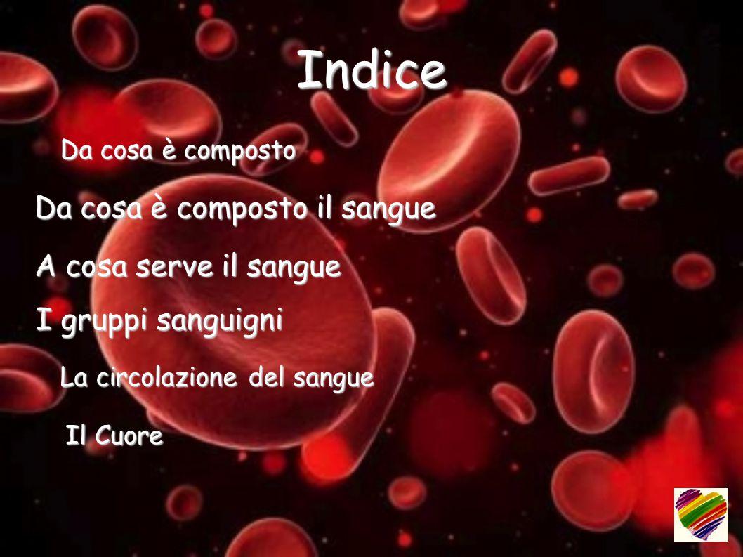 Indice Da cosa è composto il sangue A cosa serve il sangue