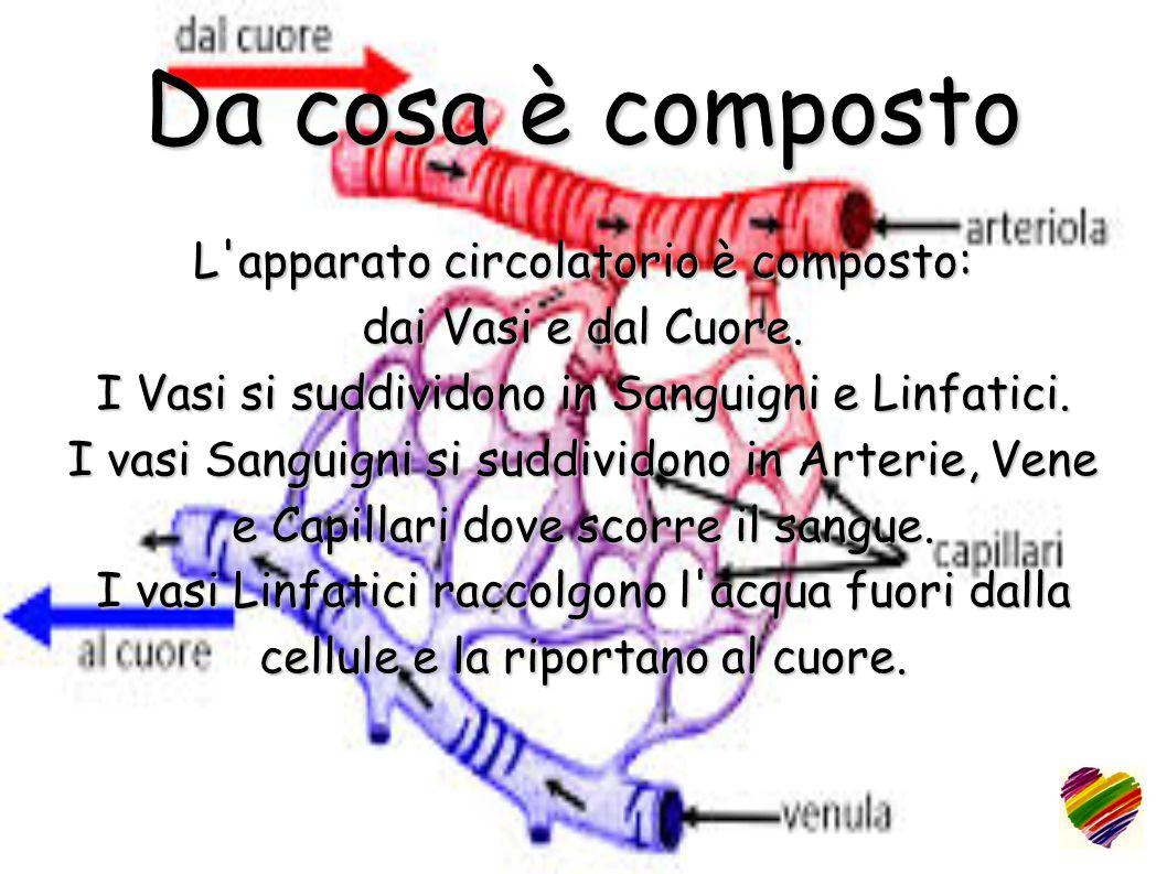 Da cosa è composto L apparato circolatorio è composto: