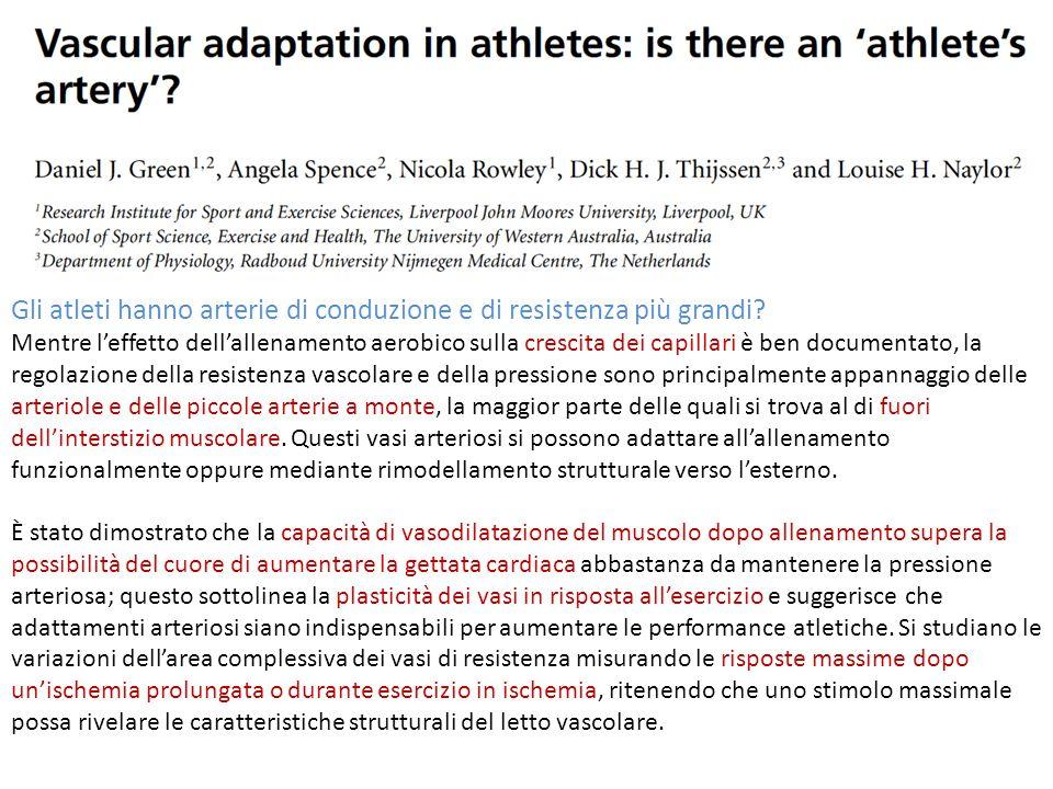 Gli atleti hanno arterie di conduzione e di resistenza più grandi