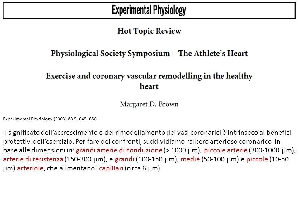 Experimental Physiology (2003) 88.5, 645–658.