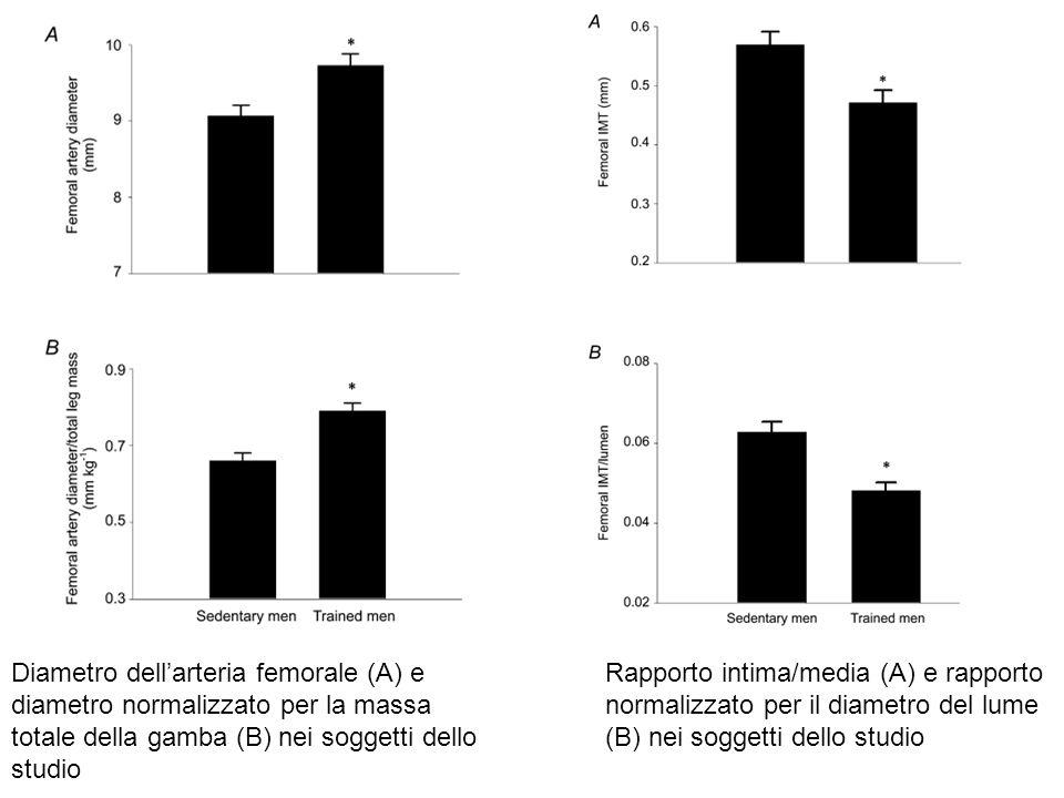 Diametro dell'arteria femorale (A) e diametro normalizzato per la massa totale della gamba (B) nei soggetti dello studio