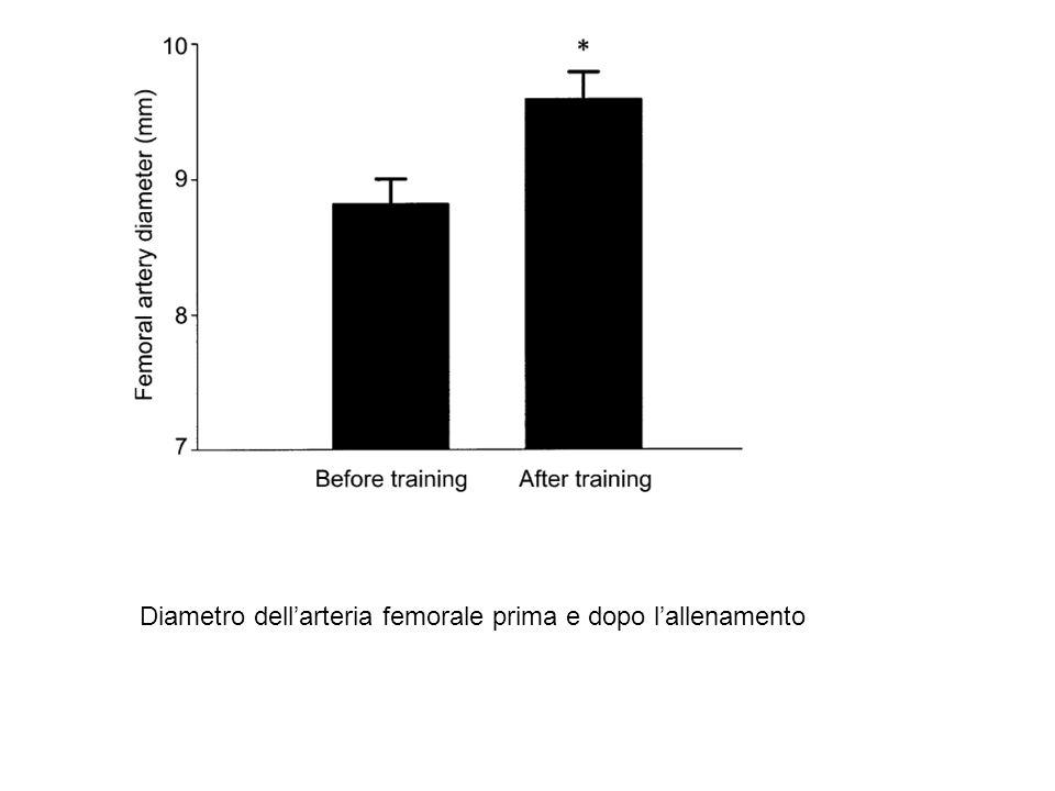 Diametro dell'arteria femorale prima e dopo l'allenamento