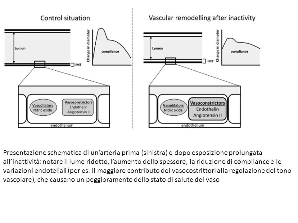 Presentazione schematica di un'arteria prima (sinistra) e dopo esposizione prolungata all'inattività: notare il lume ridotto, l'aumento dello spessore, la riduzione di compliance e le variazioni endoteliali (per es.