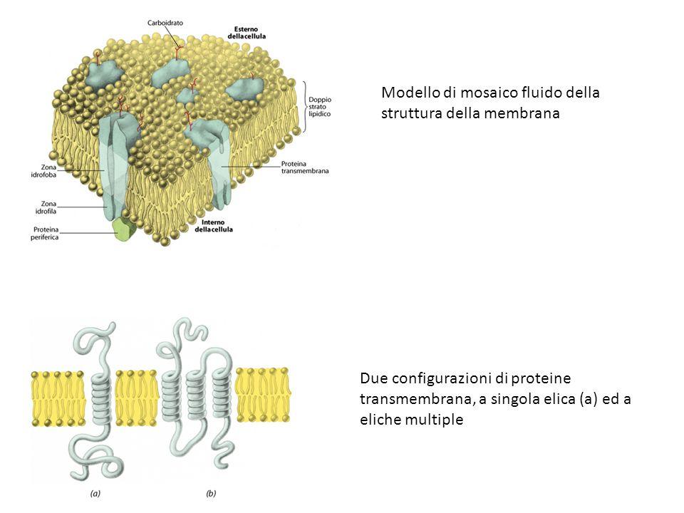 Modello di mosaico fluido della struttura della membrana