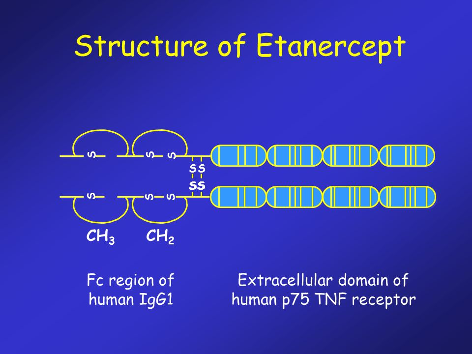 Structure of Etanercept