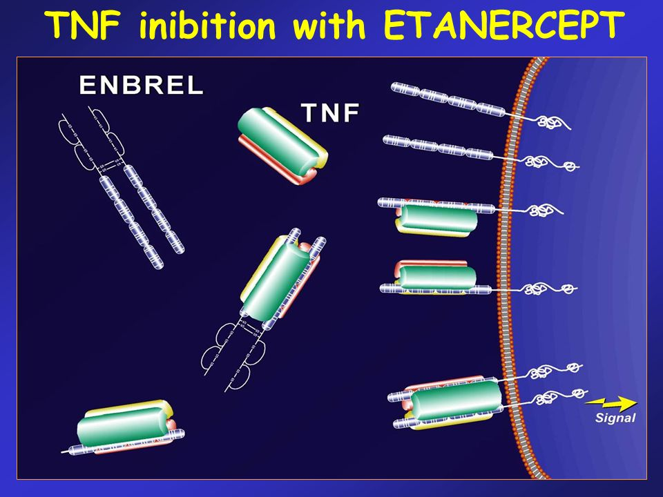 TNF inibition with ETANERCEPT