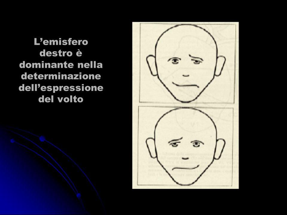 L'emisfero destro è dominante nella determinazione dell'espressione del volto