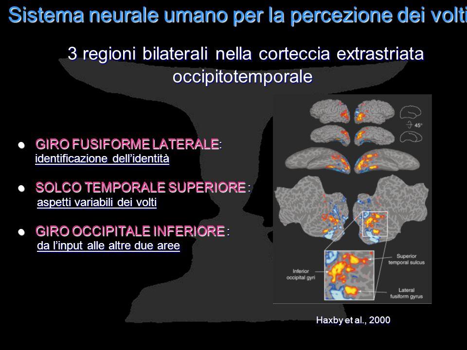 Sistema neurale umano per la percezione dei volti