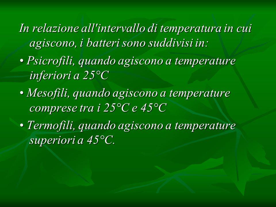 In relazione all intervallo di temperatura in cui agiscono, i batteri sono suddivisi in: