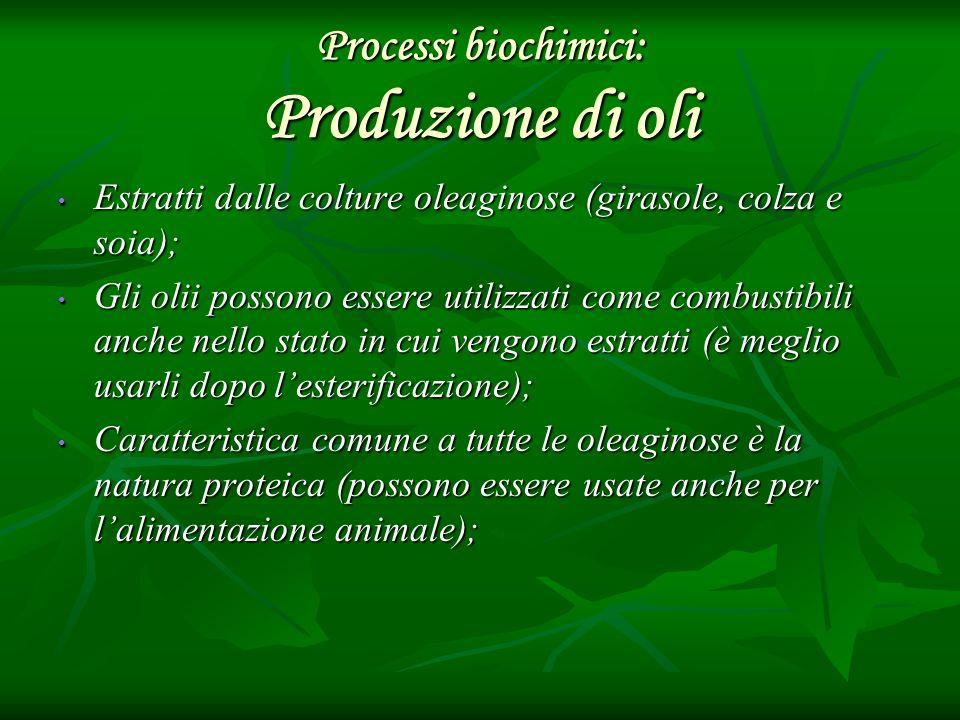 Processi biochimici: Produzione di oli