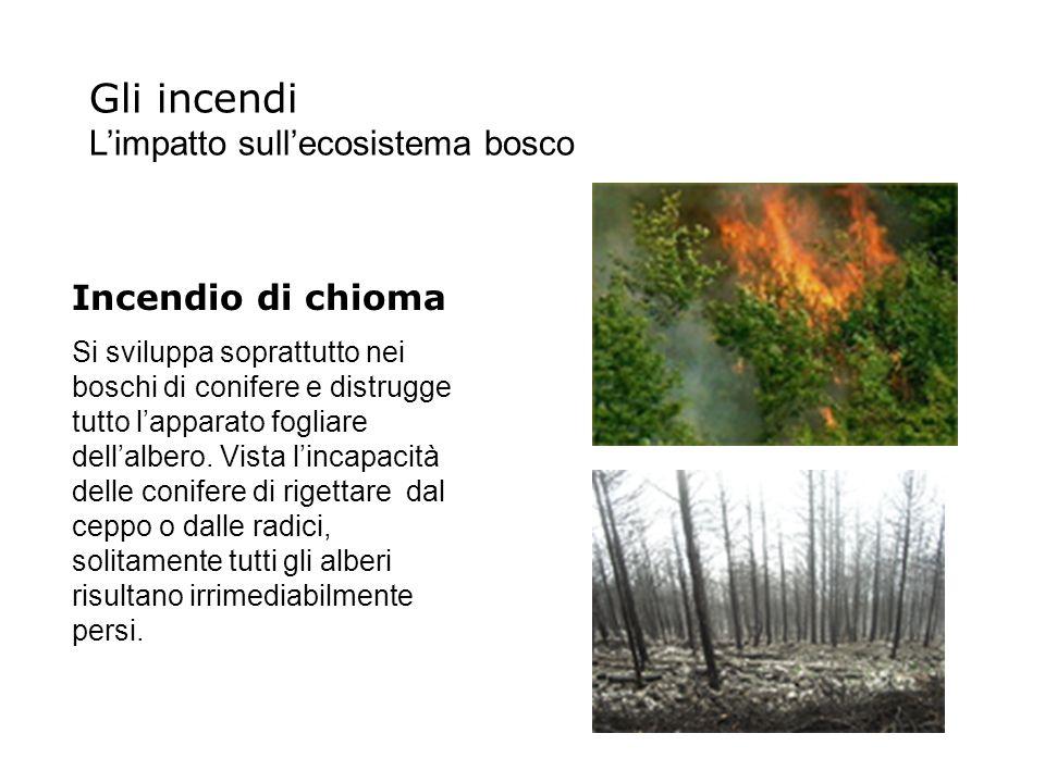 Gli incendi L'impatto sull'ecosistema bosco Incendio di chioma