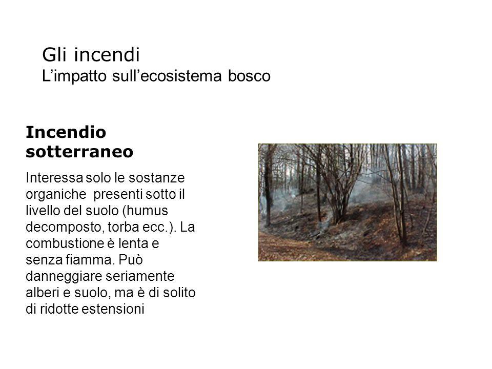 Gli incendi L'impatto sull'ecosistema bosco Incendio sotterraneo