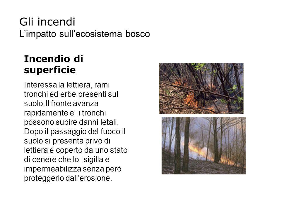 Gli incendi L'impatto sull'ecosistema bosco Incendio di superficie