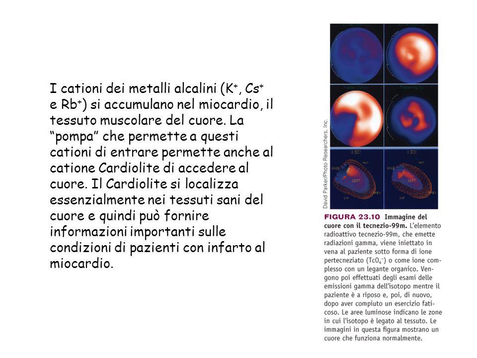 I cationi dei metalli alcalini (K+, Cs+ e Rb+) si accumulano nel miocardio, il tessuto muscolare del cuore.