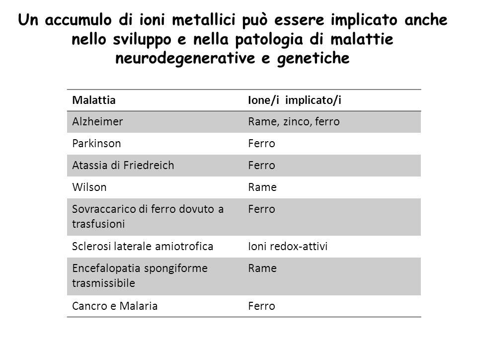 Un accumulo di ioni metallici può essere implicato anche nello sviluppo e nella patologia di malattie neurodegenerative e genetiche
