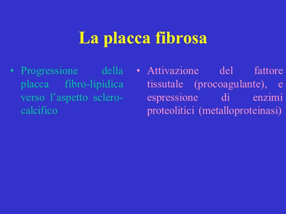 La placca fibrosa Progressione della placca fibro-lipidica verso l'aspetto sclero- calcifico.