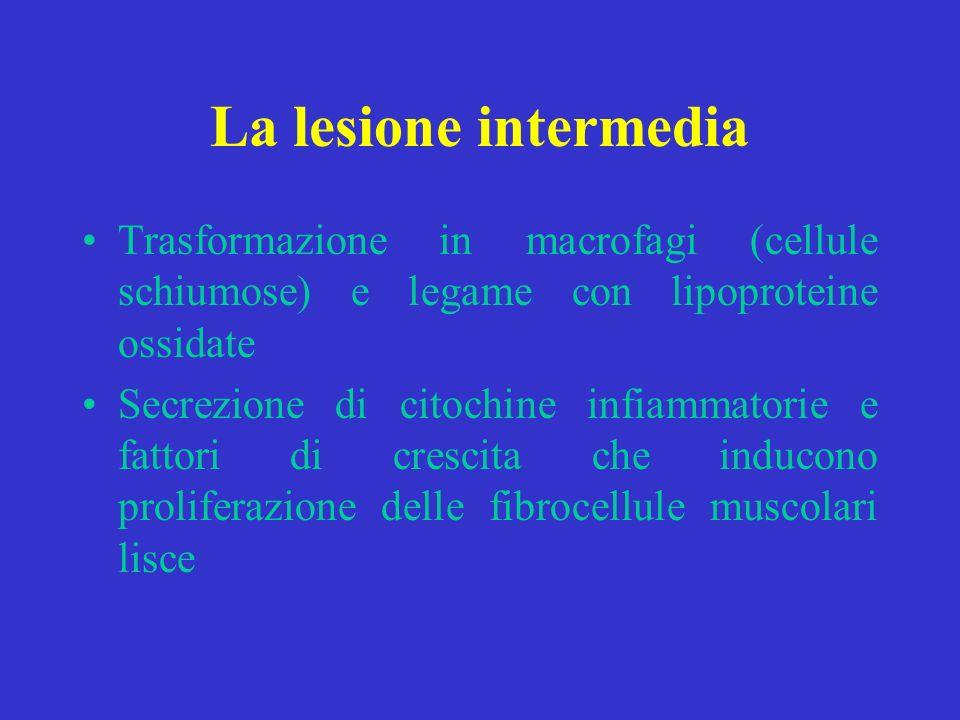 La lesione intermediaTrasformazione in macrofagi (cellule schiumose) e legame con lipoproteine ossidate.