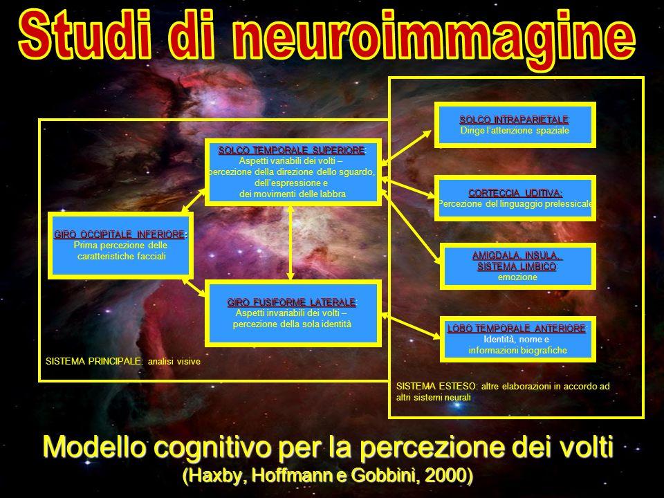 Studi di neuroimmagine