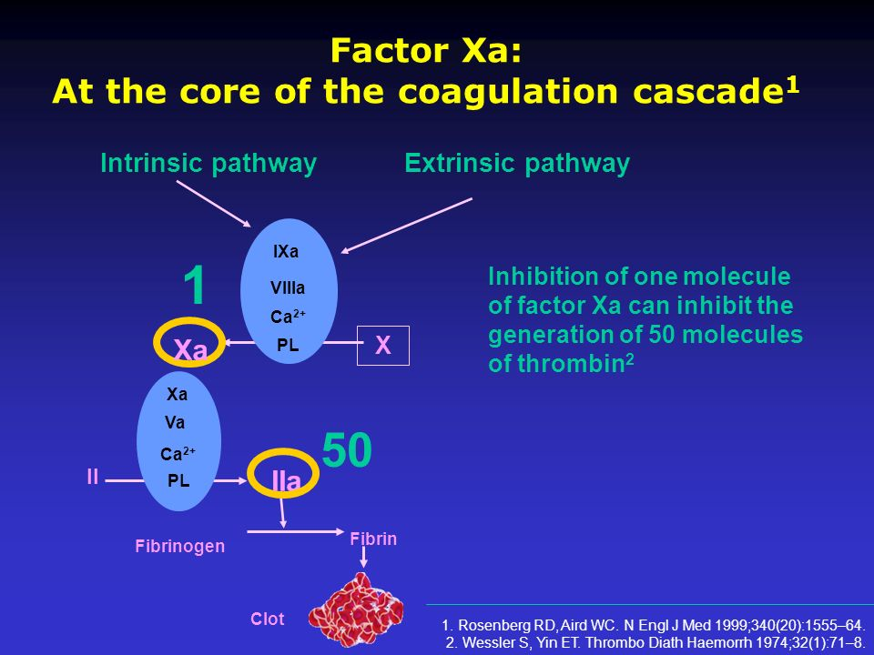 Factor Xa: At the core of the coagulation cascade1