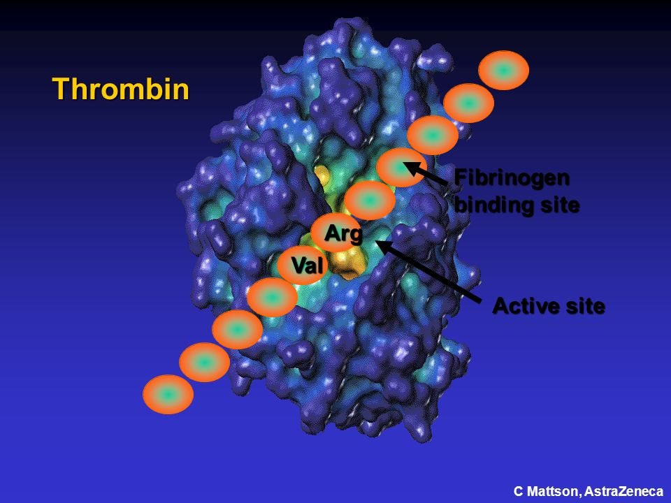 Thrombin Fibrinogen binding site Arg Val Active site