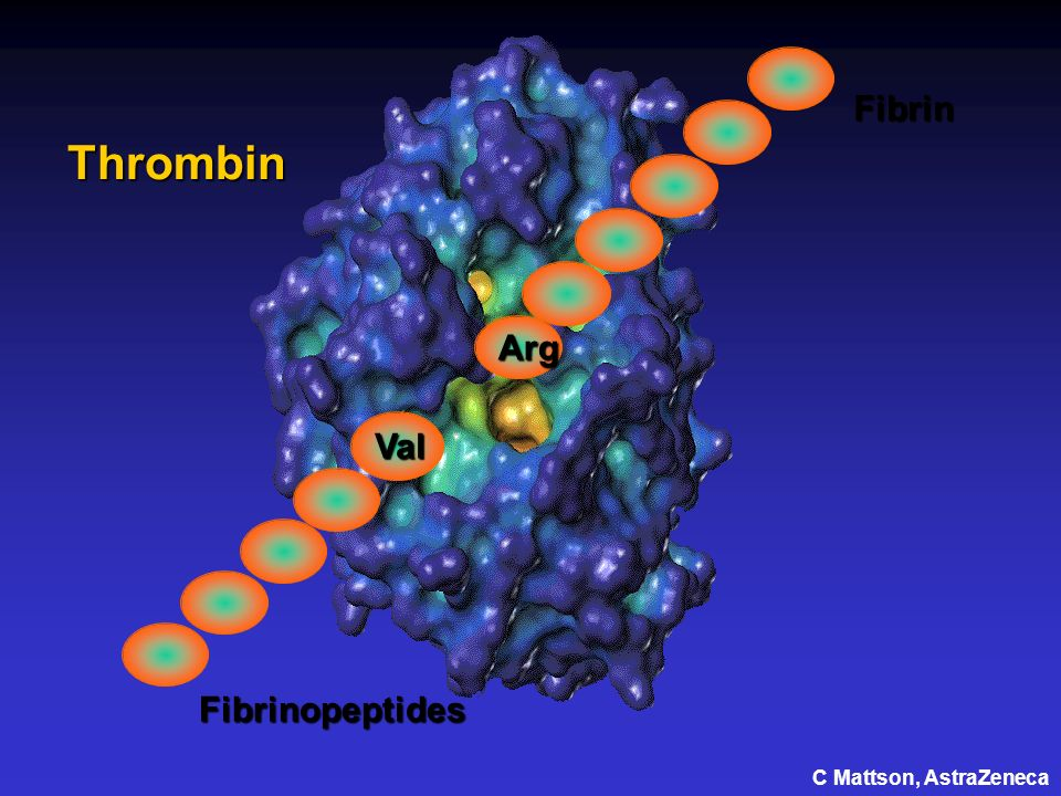 Arg Fibrin Thrombin Val Fibrinopeptides C Mattson, AstraZeneca