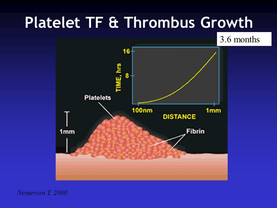 Platelet TF & Thrombus Growth