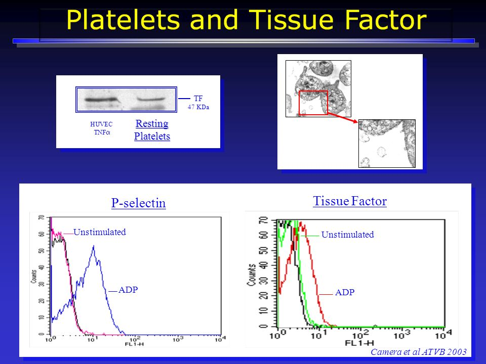 Tissue Factor P-selectin Resting Platelets Unstimulated Unstimulated