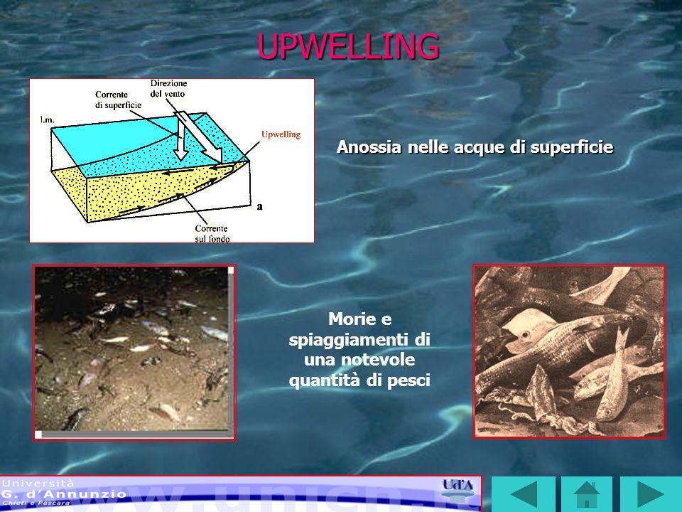 Morie e spiaggiamenti di una notevole quantità di pesci