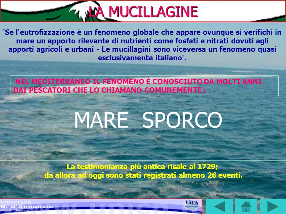 MARE SPORCO LA MUCILLAGINE